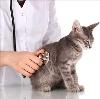Ветеринарные клиники в Айдырлинском
